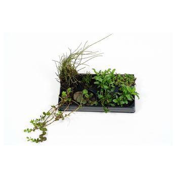 Pflanzenset: ab 8 Repositionspflanzen