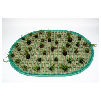 Pflanzinsel-Set 120 x 160cm oval inkl. 36 Pflanzen