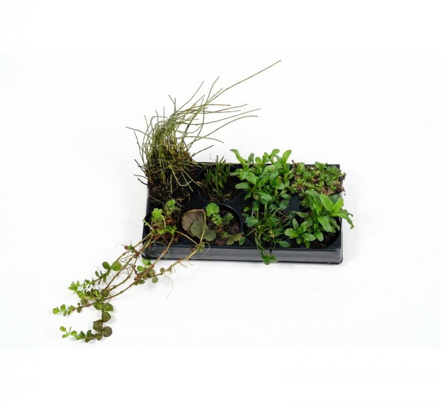 Pflanzenset: 8 Repositionspflanzen