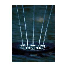 Water Starlet  Bild 4
