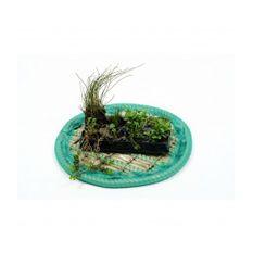 Pflanzeninsel-Set 45cm rund inkl. 8 Pflanzen
