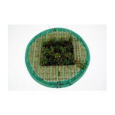 Pflanzinsel-Set 80cm rund inkl. 20 Pflanzen  Bild 2
