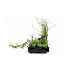 Pflanzenset: ab 8 Repositionspflanzen  Bild 2