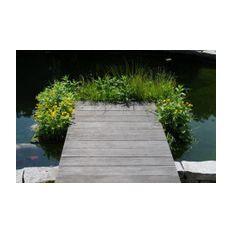 Pflanzenset: ab 8 Repositionspflanzen  Bild 3