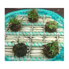 Repositionspflanze  Bild 2