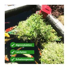 Schwimminsel Teich halbrund 80cm - für 8 bis 12 Pflanzen  Bild 2